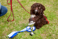 Tatton Dog Show 2015